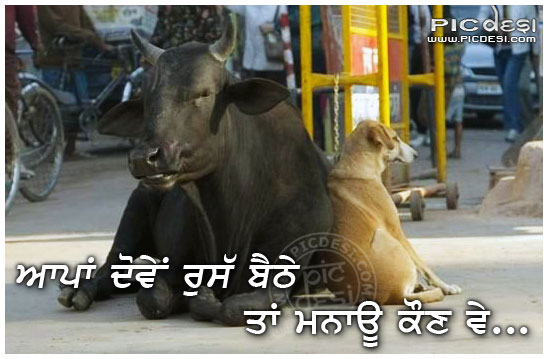 Aapan Doven Russ Baithe Punjabi Funny Picture