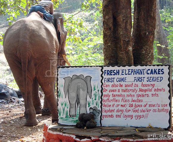 Fresh Elephant Cakes India Funny