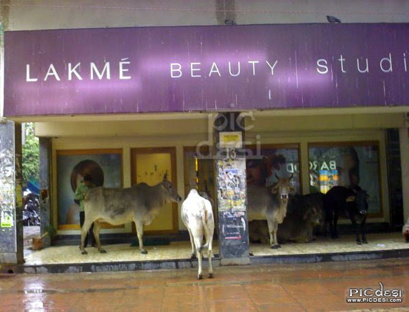 Lakme Beauty Studio India Funny Picture