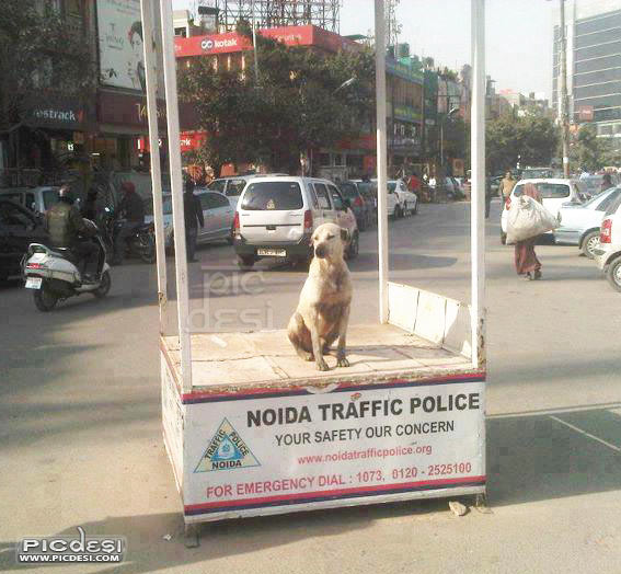 Noida Traffic Police on duty India Funny Picture