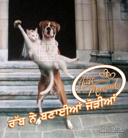 Rabb Ne Banayiyan Jodiyan Punjabi Funny Picture