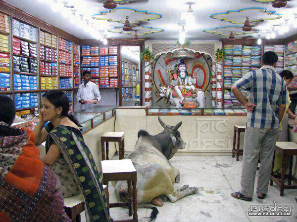 Only in India Cow at Shop India Funny Picture