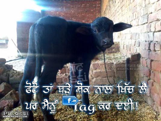 Mainu TAG kar deyin Punjabi Funny
