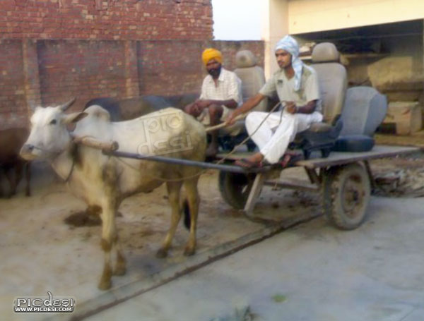 Special rehda with deluxe seats Punjabi Funny Picture