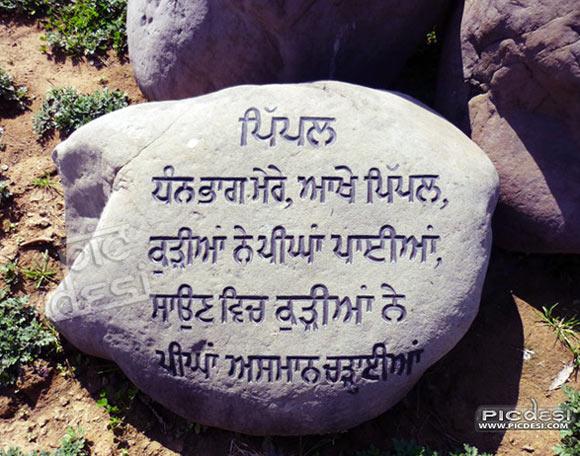 Pipal   Dhann Bhaag Mere Punjabi