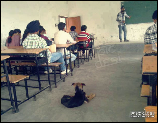 Dog in Classroom Funny Pic India Funny Picture