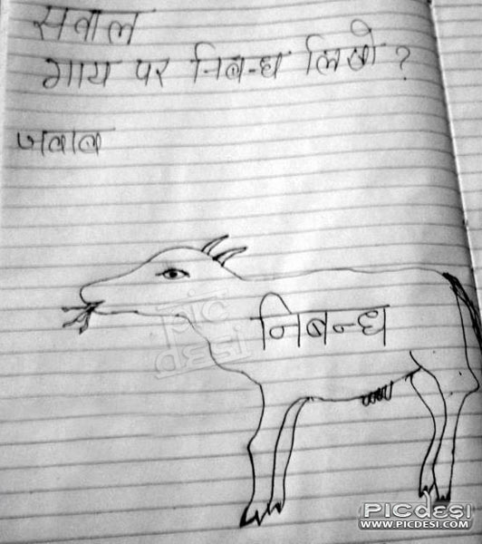 Write Essay on Cow Student Rocks India Funny Picture
