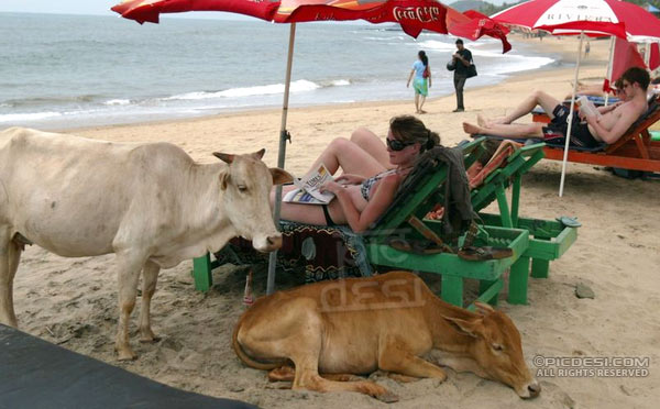 Enjoy at Beach in India India Funny Picture