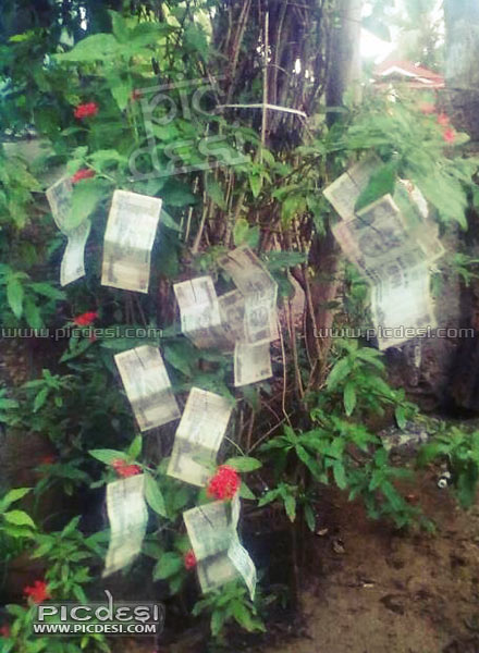 Money Tree Only in India India Funny Picture