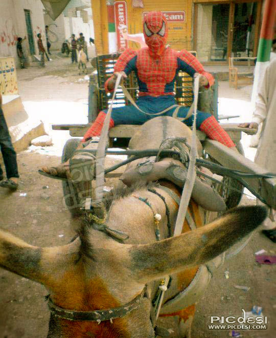 Spider Man got new vehicle India Funny Picture