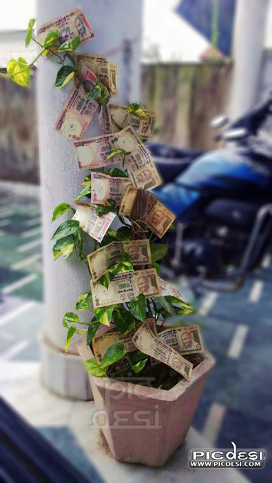 Money Plant in India India Funny Picture