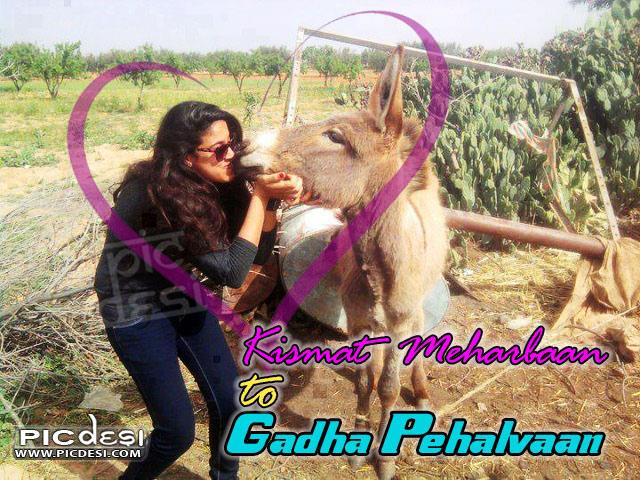 Kismat Meharbaan To Gadha India Funny Picture