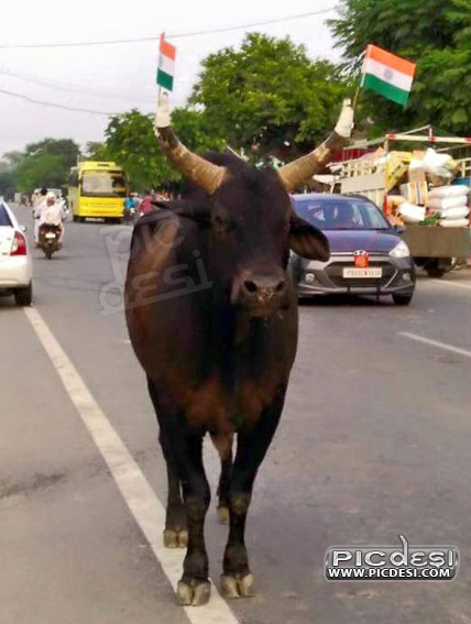 Animals Celebrate Independence Day India Funny