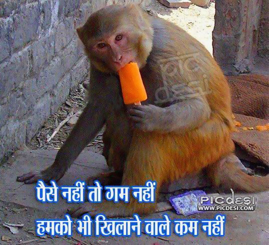Monkey Enjoying Ice Cream India Funny Picture