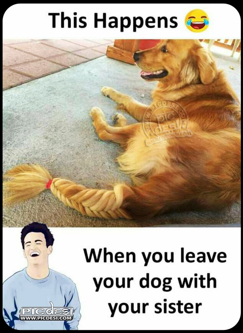 Dog Funny Hair Style Funny Picture