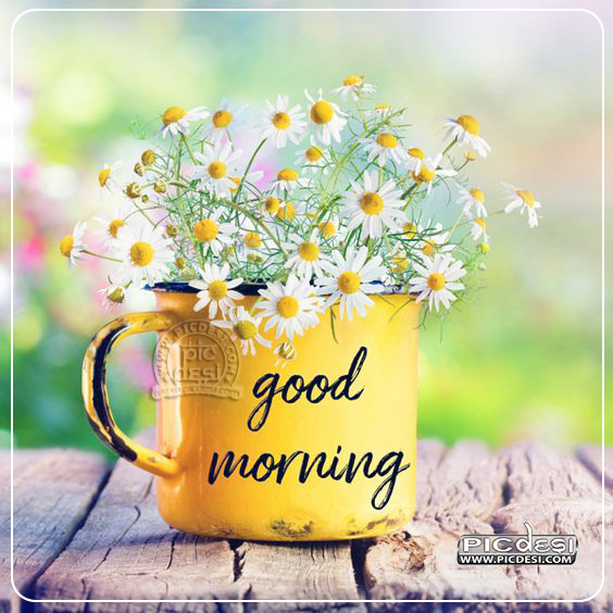 Good Morning Flowers Pot Image Good Morning Picture