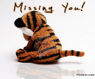 Missing You Sad Tiger Picture Miss You Picture